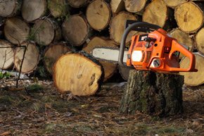 Tree chain saw