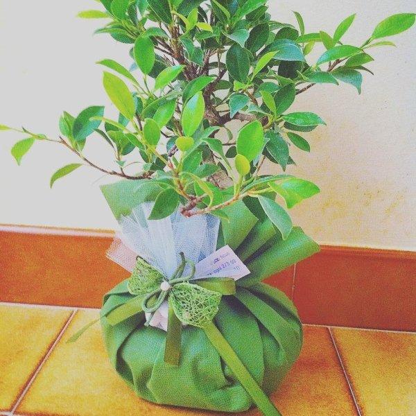 composizioni bonsai per cerimonie