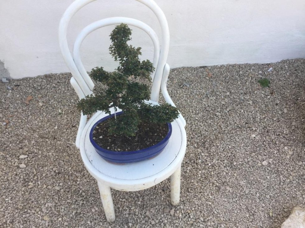 bonsai Fondi