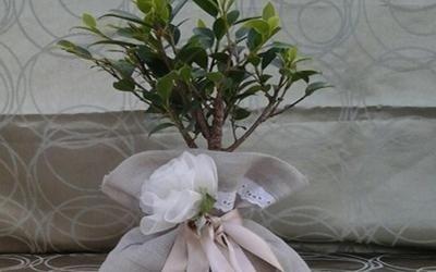 Composizioni piante