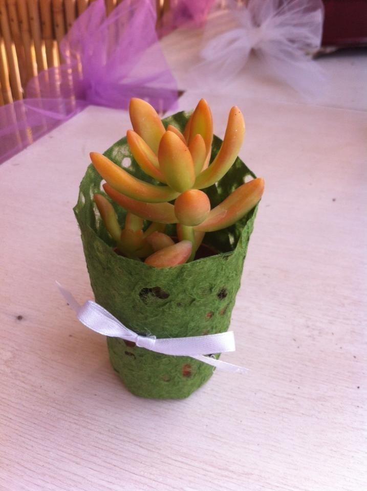 piante grasse come bomboniere