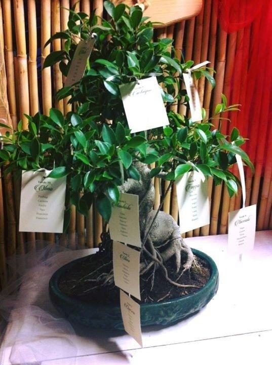 realizzazione tableau bonsai e alberi Latina