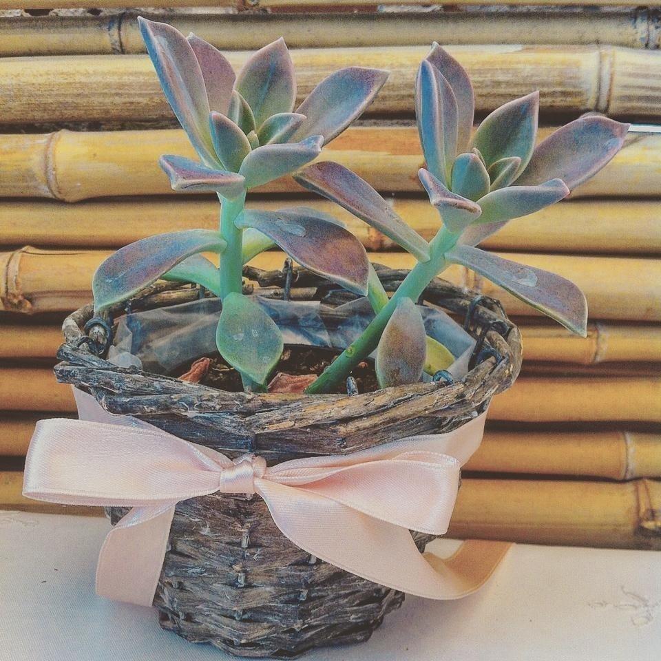 piante segnaposto