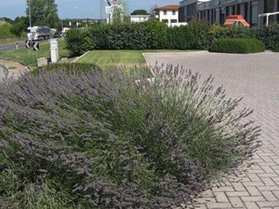 fiori giardino azienda