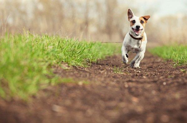 Cucciolo corre in un parco a Pace di Mela