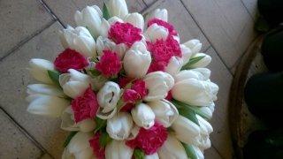 mazzi di fiori, piante appartamento