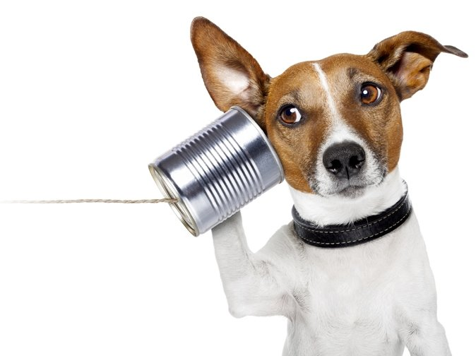 dog can phone
