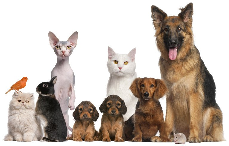 Pets that go to the veterinarian clinic in Wantirna