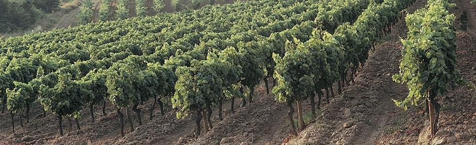 Consorzio difesa produzioni vitivinicole