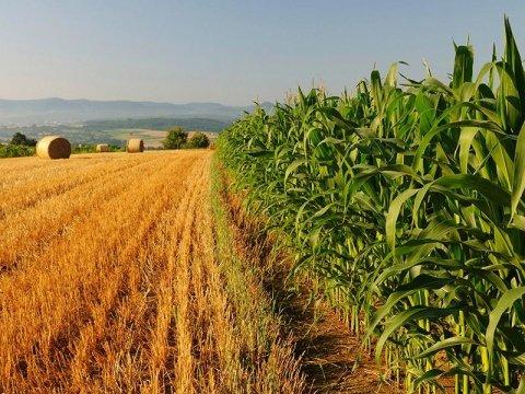 Assicurazioni sui raccolti agricoli