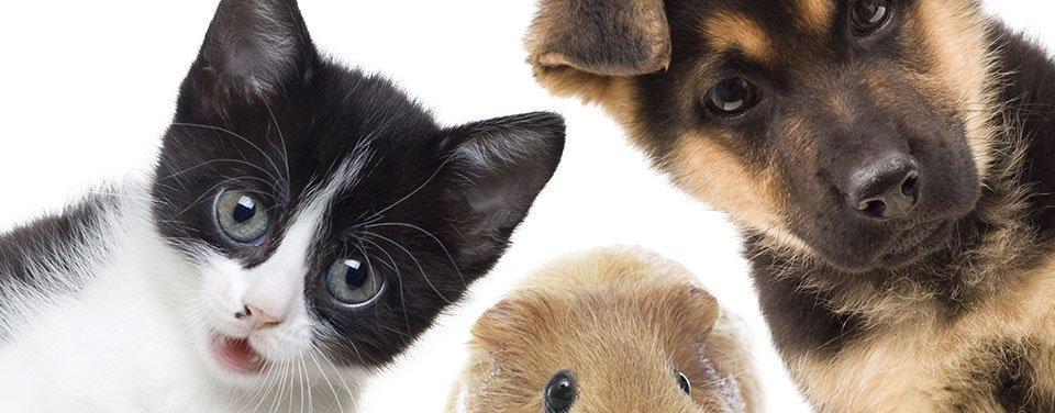 un gatto, un cane e un topo
