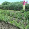 piante aromatiche, campi coltivati