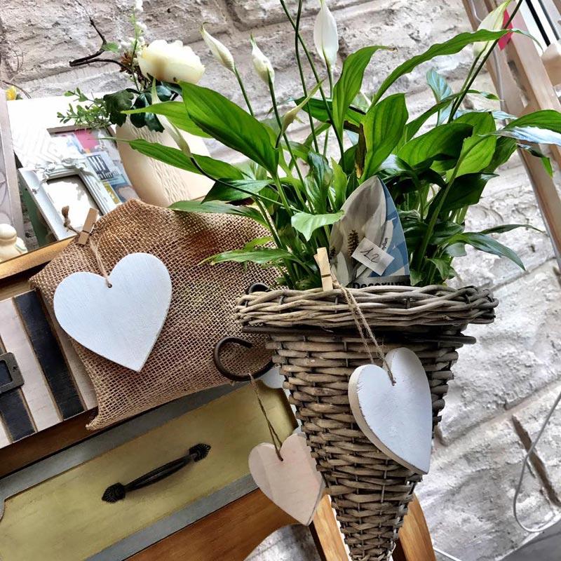 pianta con un cuore di legno bianco appeso al vaso di vimini