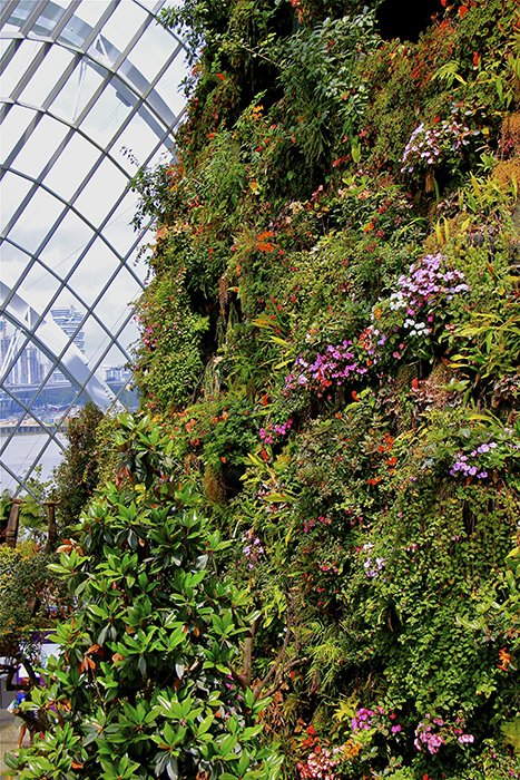 Cool Moist Conservatory Garden By The Bay Proprietary
