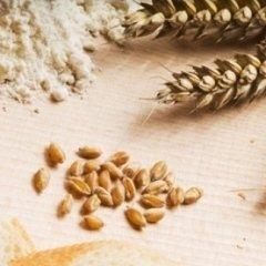 sacchetti per farine e cereali