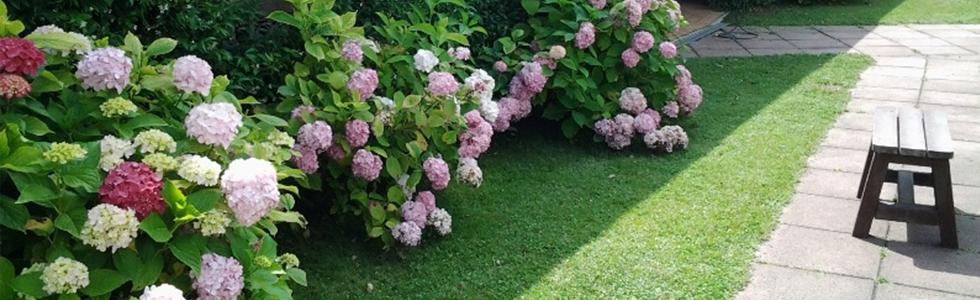 giardinaggio e manutenzione
