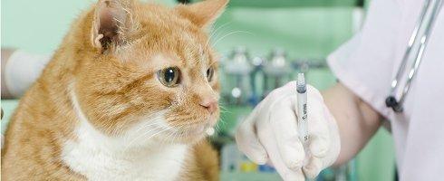 Ospedale veterinario Conegliano