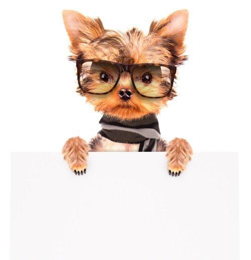 Piccolo cane con occhiali e sciarpa