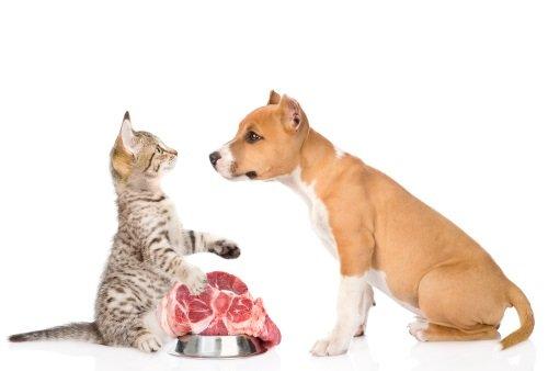 Gatto controllando il piatto di carne e il cane implorando