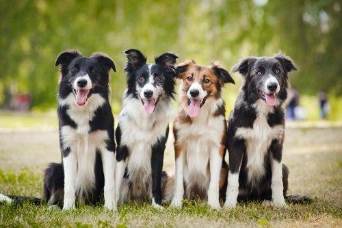 Tre cani uguali e uno diverso