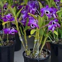 piante da giardino2