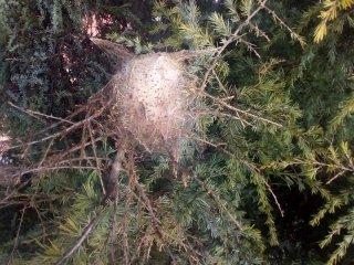 Trattamenti contro la processionaria del pin