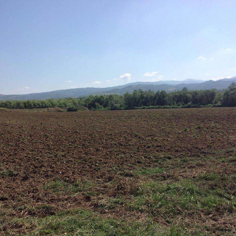 campo coltivato mais