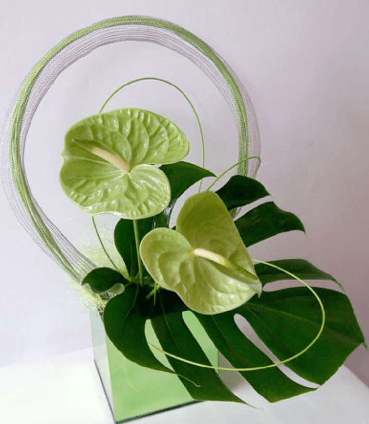 stylish leaf