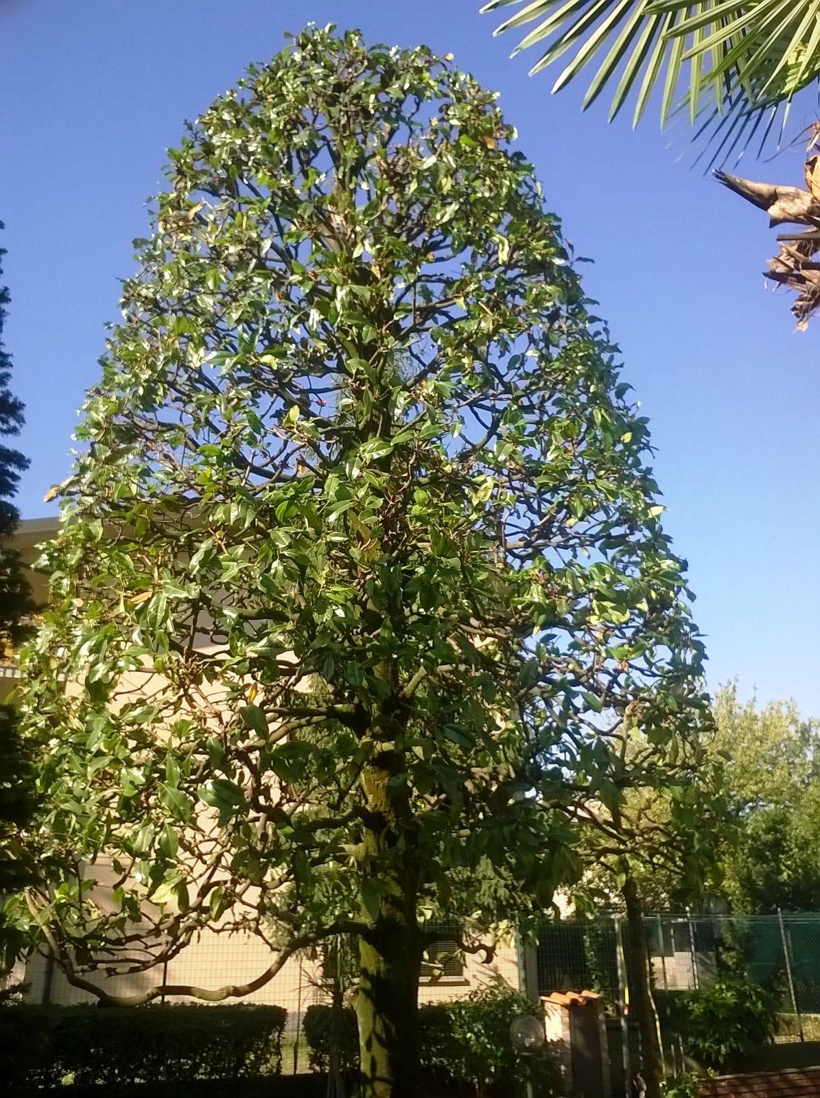 veduta di un albero ad alto fusto