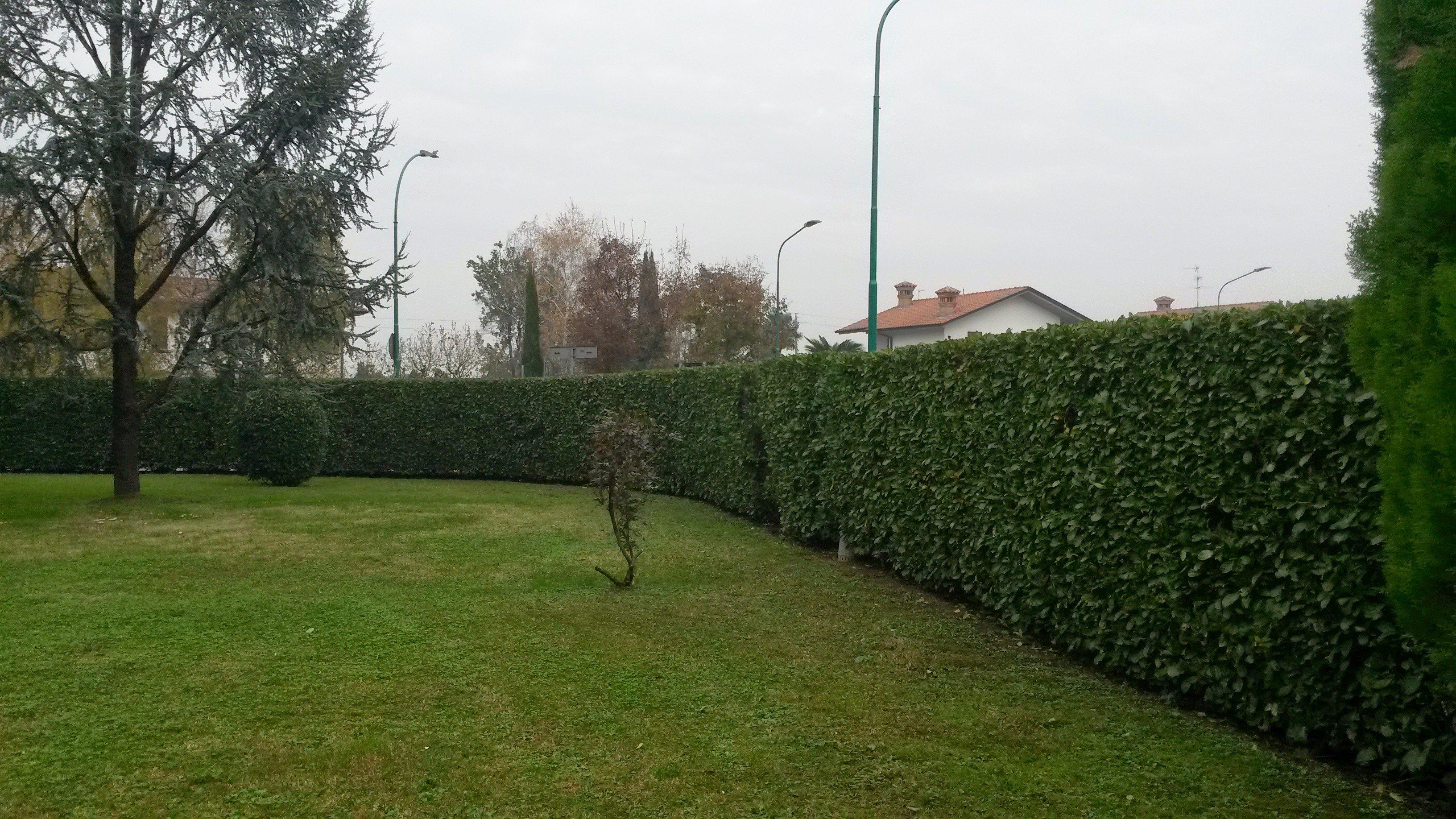 veduta di un giardino con siepe