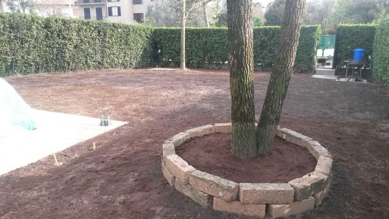 veduta di una albero in un prato senza erba