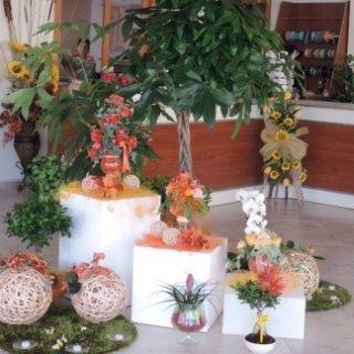 piante fiori decorazioni