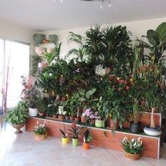 piante piccolo fusto