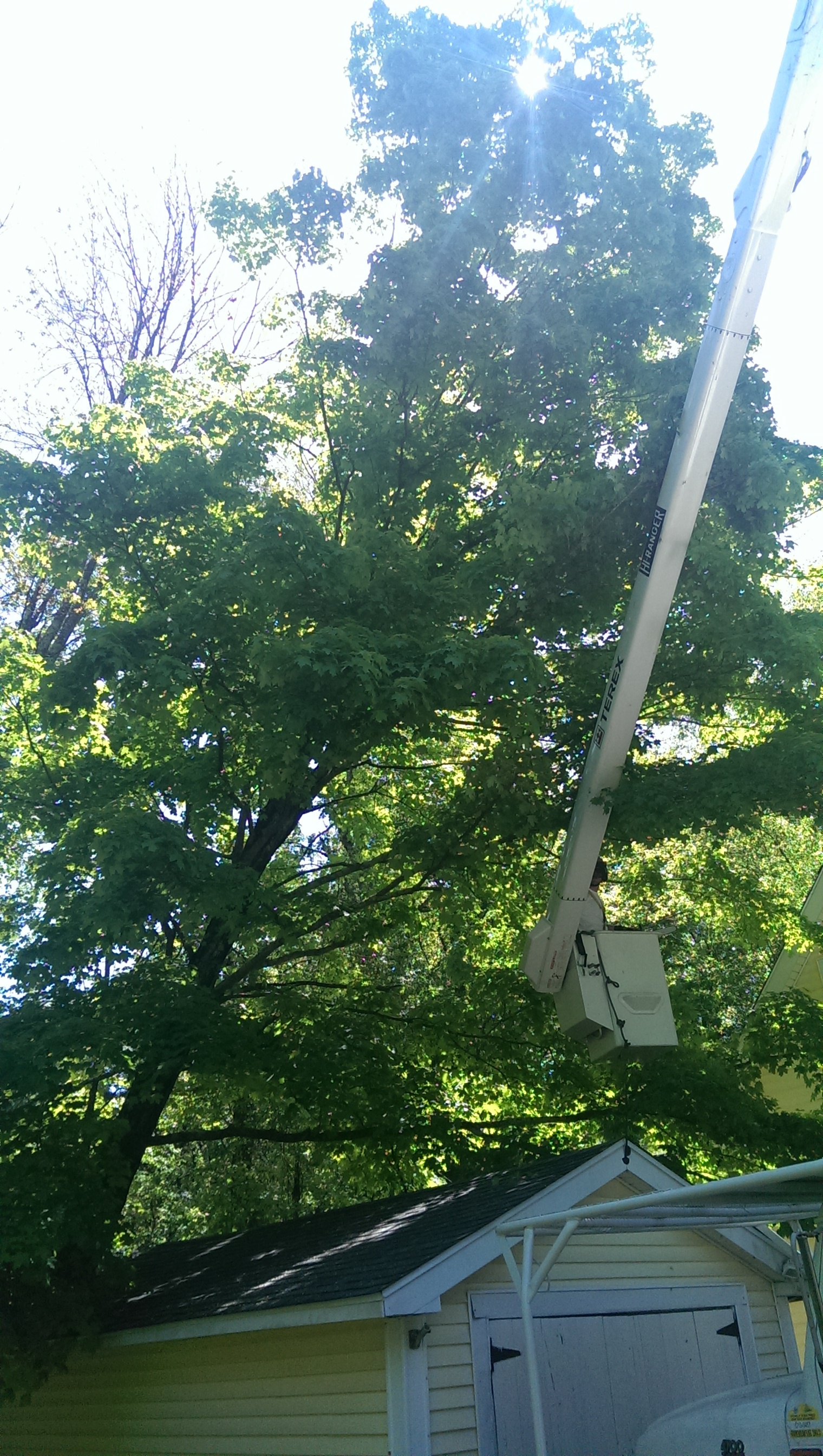 Tree Removal Services Brookline