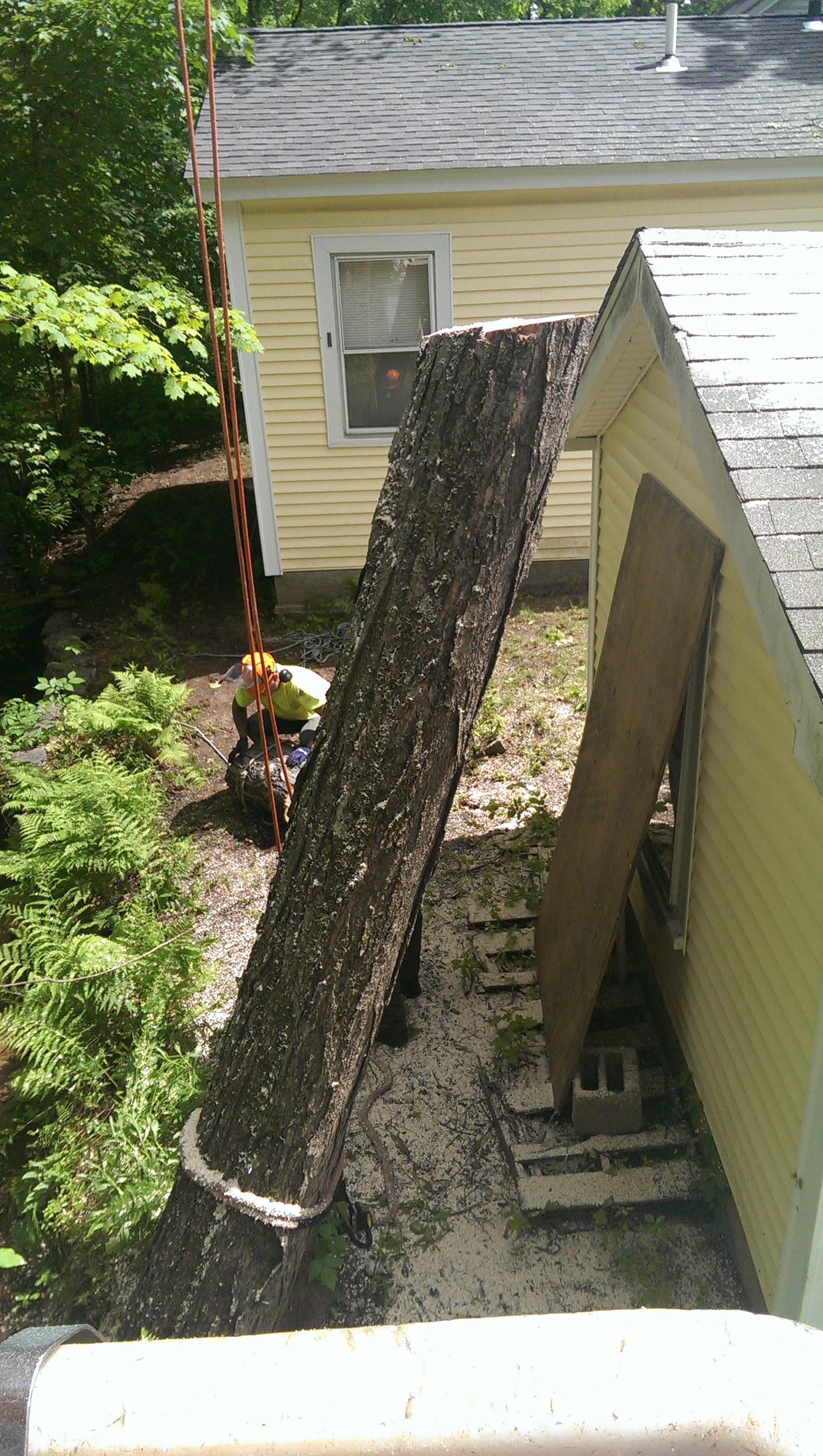 tree removal project