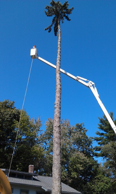 tree trimming by crane