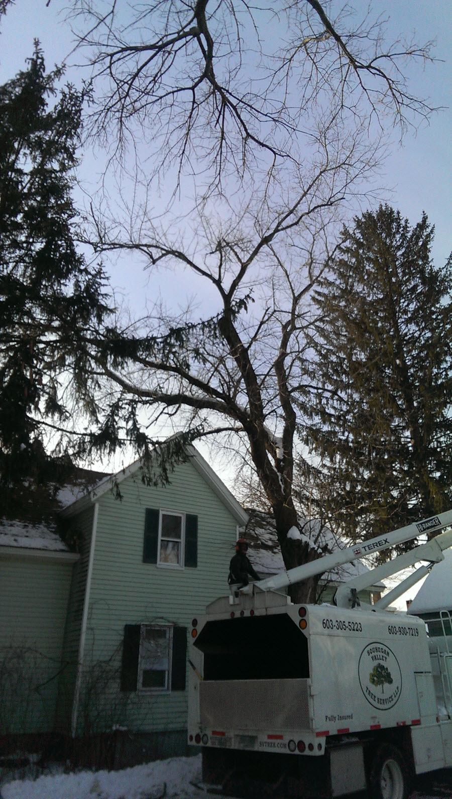 Tree Service in Brookline