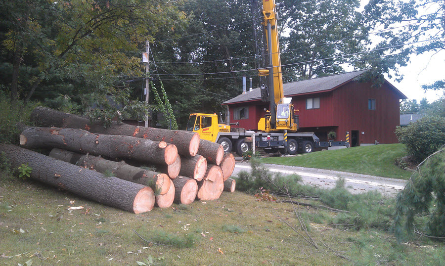 efficient tree removal