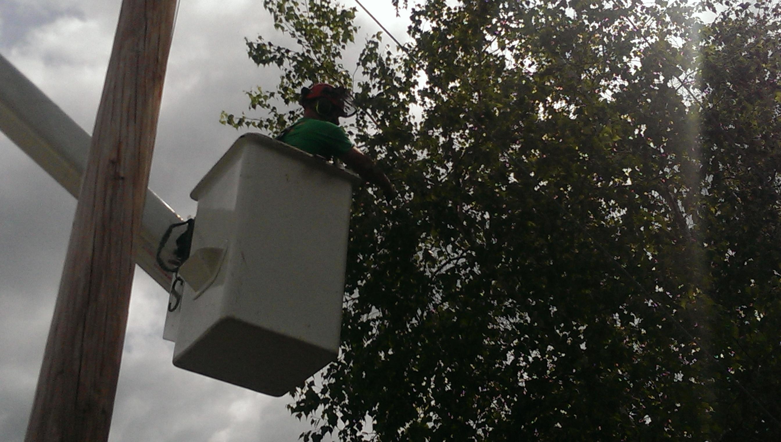 Crane Work Removing Trees in Hollis, NH