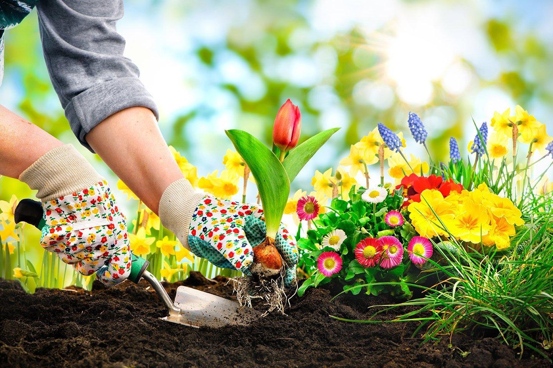 persona che fa giardinaggio