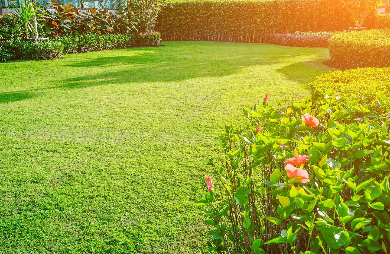 giardino con vasto prato verde