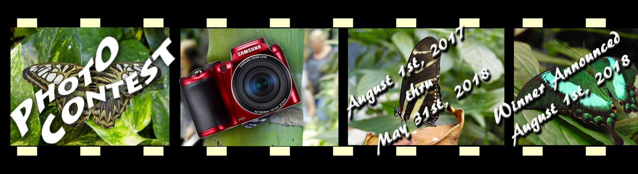 The Butterfly Palace & Rainforest Adventure - Branson, MO 65616 - Photo Contest