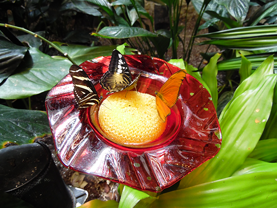 The Butterfly Palace and Rainforest Adventure - Branson, Missouri 65616