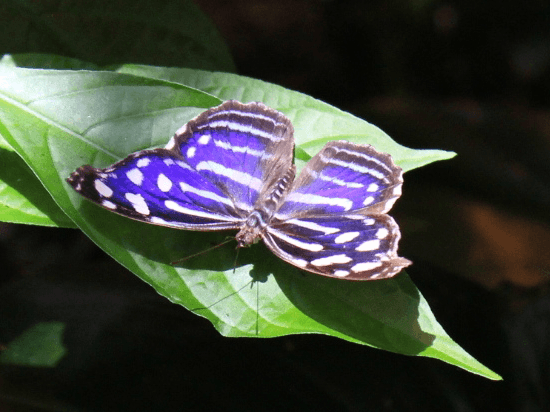 The Butterfly Palace and Rainforest Adventure - Branson, Missouri 65616 - Photo Gallery