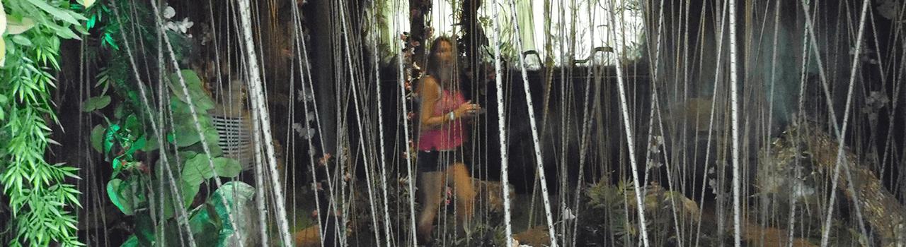 The Butterfly Palace & Rainforest Adventure - Banyan Tree Adventure - Branson, MO 65616