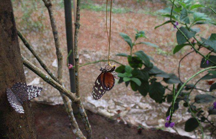 Butterfly Conservation, Monarch Conservation