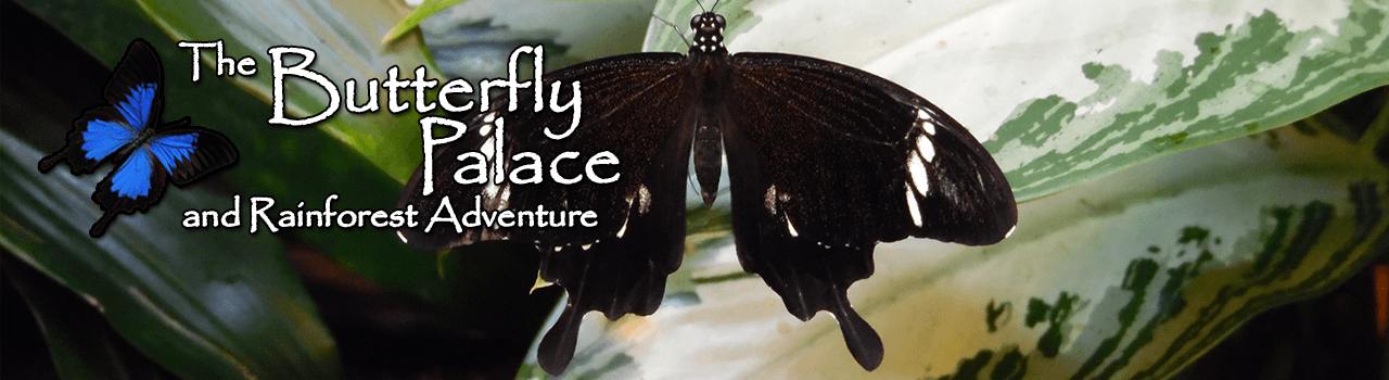 Butterfly palace coupons