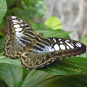 The Butterfly Palace & Rainforest Adventure - Branson, MO 65616