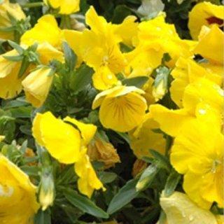 Vivaio piante e fiori