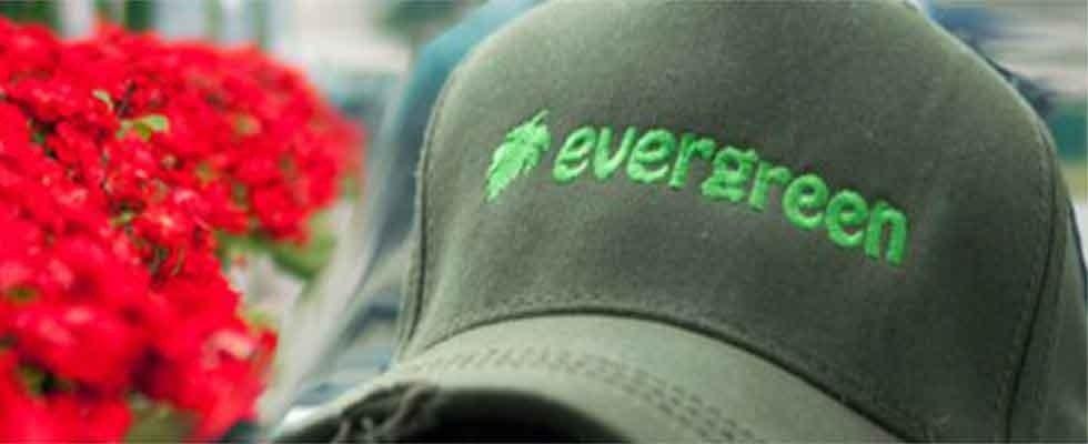 Giardinaggio Evergreen
